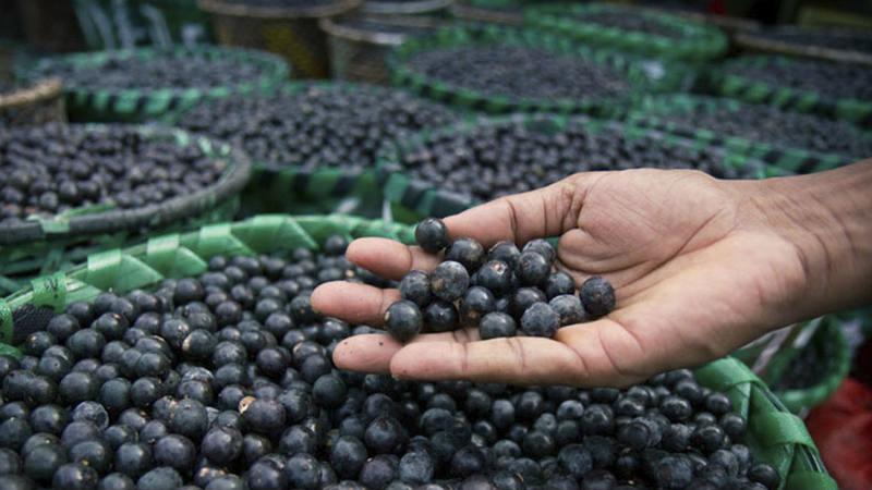 Los arándanos se empiezan a consumir cada vez más en España