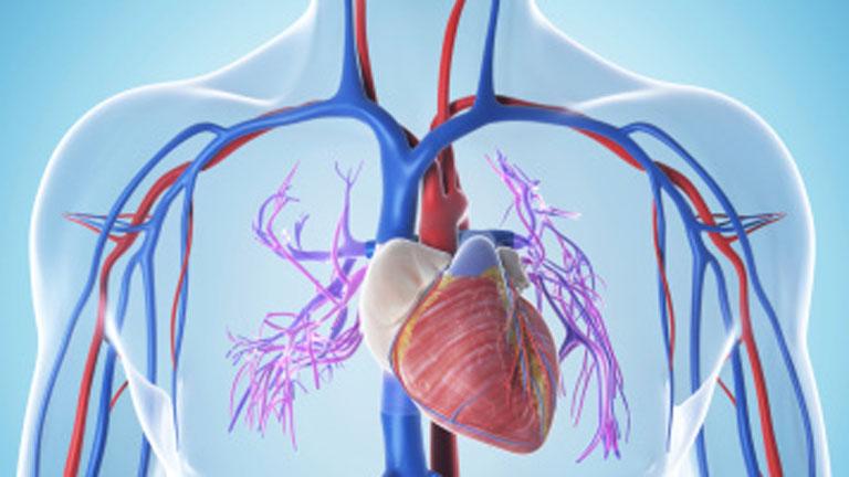 Saber vivir - Arterias limpias y más jóvenes