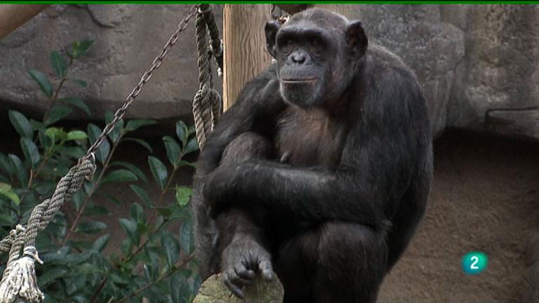 La Aventura del Saber. Fundación Barcelona Zoo