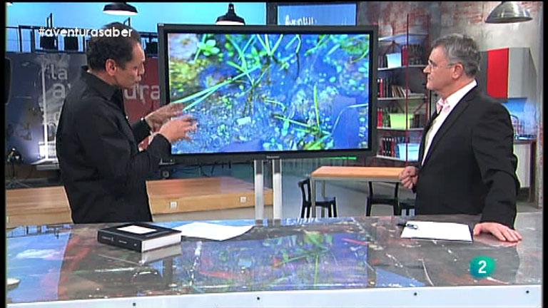 La Aventura del Saber. José Manuel Crespo. Divulgación medioambiental. Anfibios