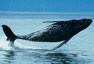La aventura de la vida - La tragedia de los cetáceos ( 10/09/1974)