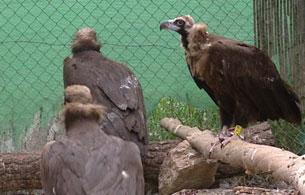 Ver vídeo  'Las aves migratorias están sufriendo cambios a causa del calentamiento global'