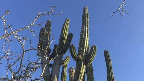 Españoles en el mundo - Baja California
