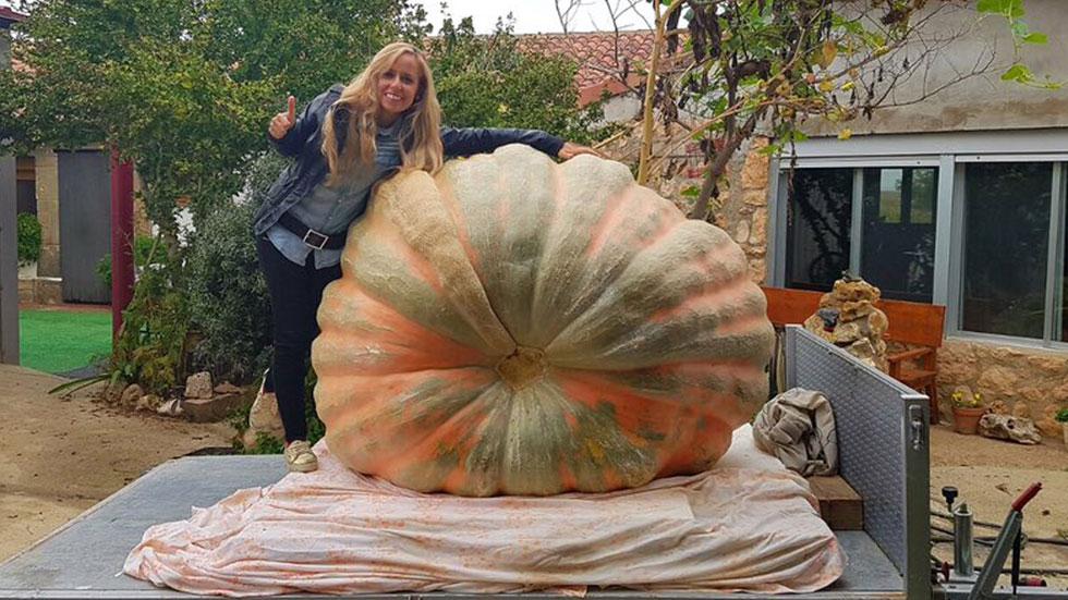 España Directo- Una calabaza de 616 kilos