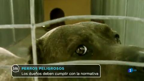 La Mañana - Cambia la normativa del cuidado de perros peligrosos
