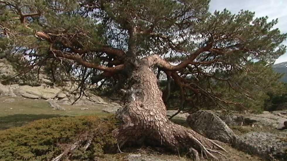 El bosque protector - Cambio climático y su influencia en los bosques españoles