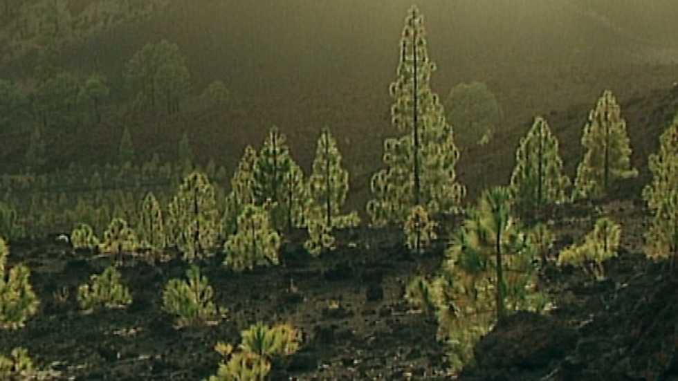 El bosque protector - Canarias, monumento natural