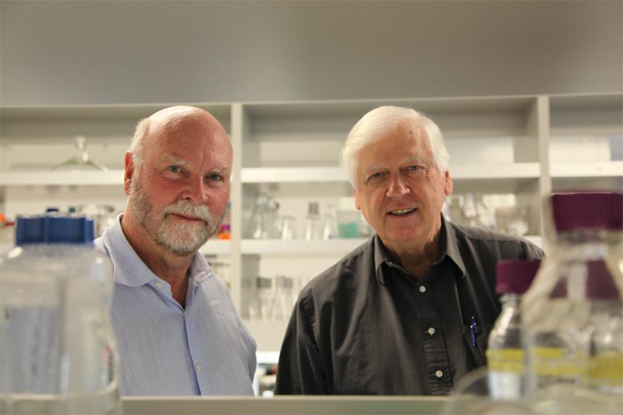 Una célula con ADN elaborado por los científicos, ¿vida  artificial?