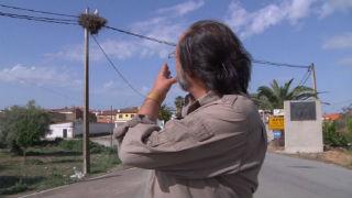 Aquí la tierra - Las cigüeñas de El Gordo