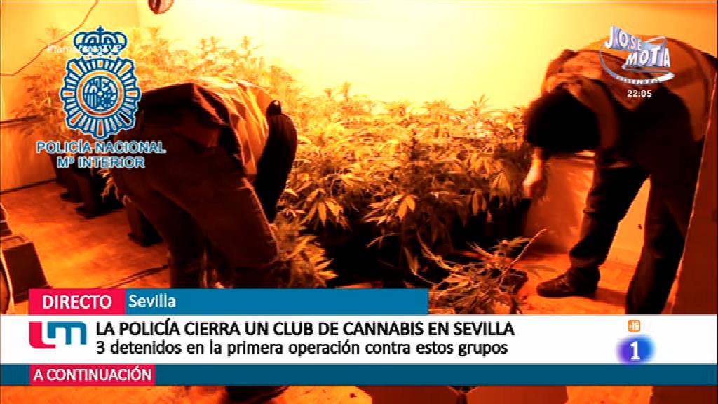 Clubes de cannabis, ¿legales?
