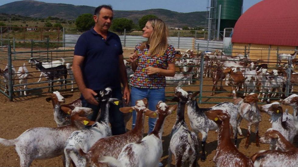 Aquí la tierra - Conoce a las cabras floridas