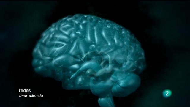 Redes - Antes y después de conocer el cerebro