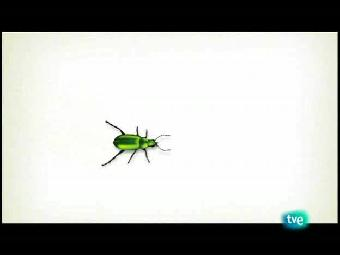El escarabajo verde - Contra corriente