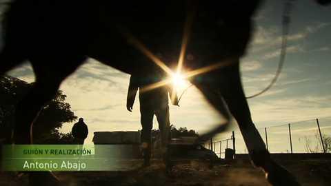 Jara y sedal - Copa del aceite
