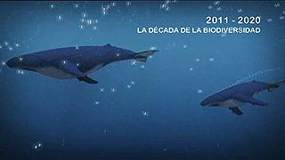 UNED - 2011-2020: La Década de la Biodiversidad - 01/04/11