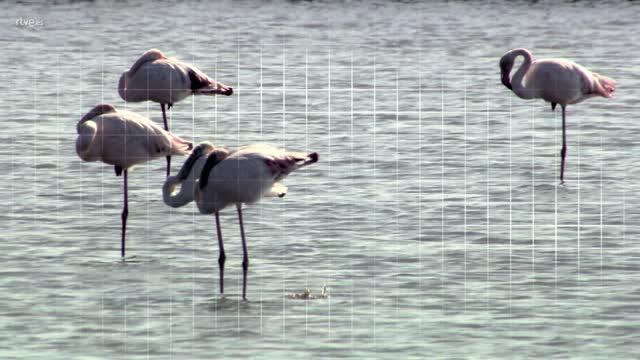¡Qué animal! - Delta del Ebro (Tarragona) - Avance