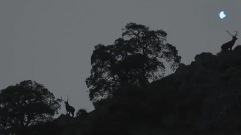 Carrera de montaña - Desafío Somiedo 2018