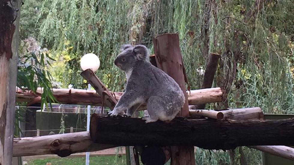 España Directo- Un día en el zoo de Madrid