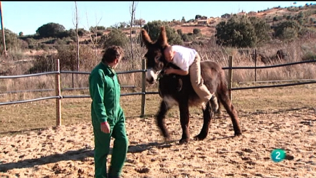El escarabajo verde - Doctor animal