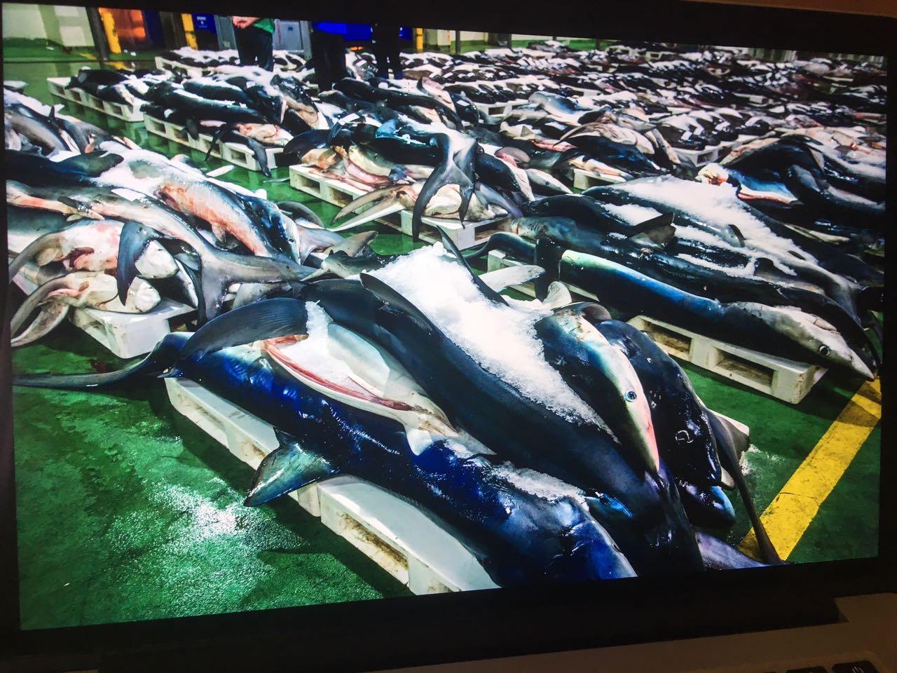 Documentos TV - Pesca, fraude con etiqueta - avance