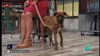 A punto con La 2 - Animales en casa - La dominancia en perros