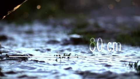 80 cm - Doñana