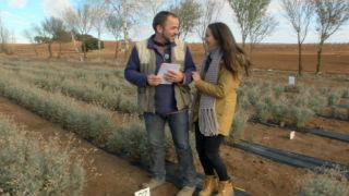Aquí la tierra - ¿Dónde se cultiva el látex?