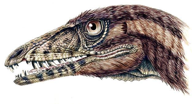Un nuevo fósil de dinosaurio