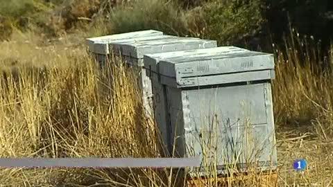 Enguany la producció de mel pot caure un 70%