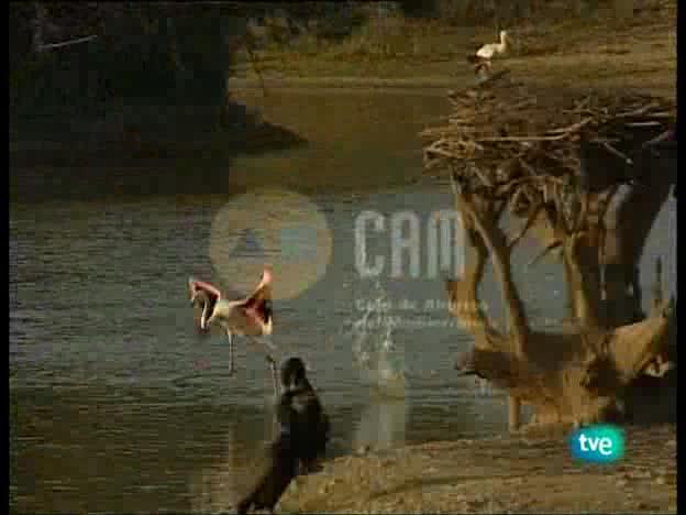 Guardianes de hábitat - Entre la espuma y la arena.