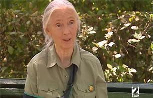 Ver vídeo 'Entrevista a Jane Goodall'