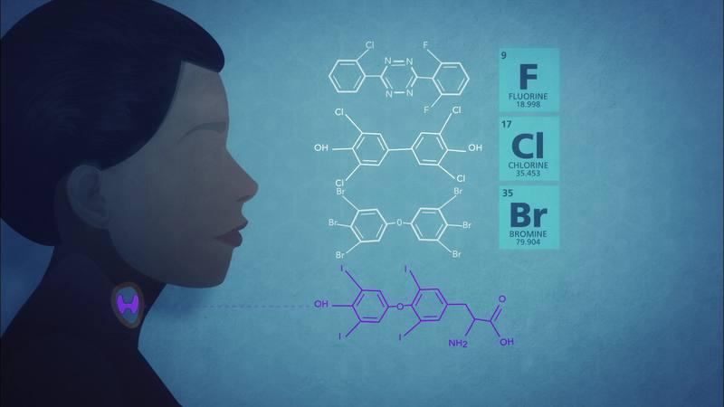 Epidemiólogos y endocrinos revelan la existencia de una conexión, entre la exposición a estas sustancias químicas nocivas y los pesticidas con el desarrollo cerebral.