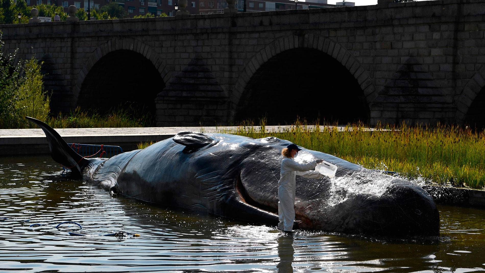 Una escultura de un cachalote en el Manzanares denuncia en Madrid el deterioro de los océanos