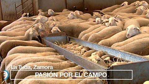 España Directo - 17/10/17