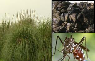 En los últimos cinco años España ha gastado 50 millones de euros en acabar con las especies invasoras
