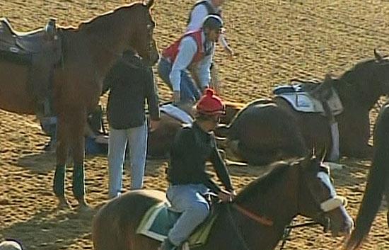 Accidente espectacular entre caballos