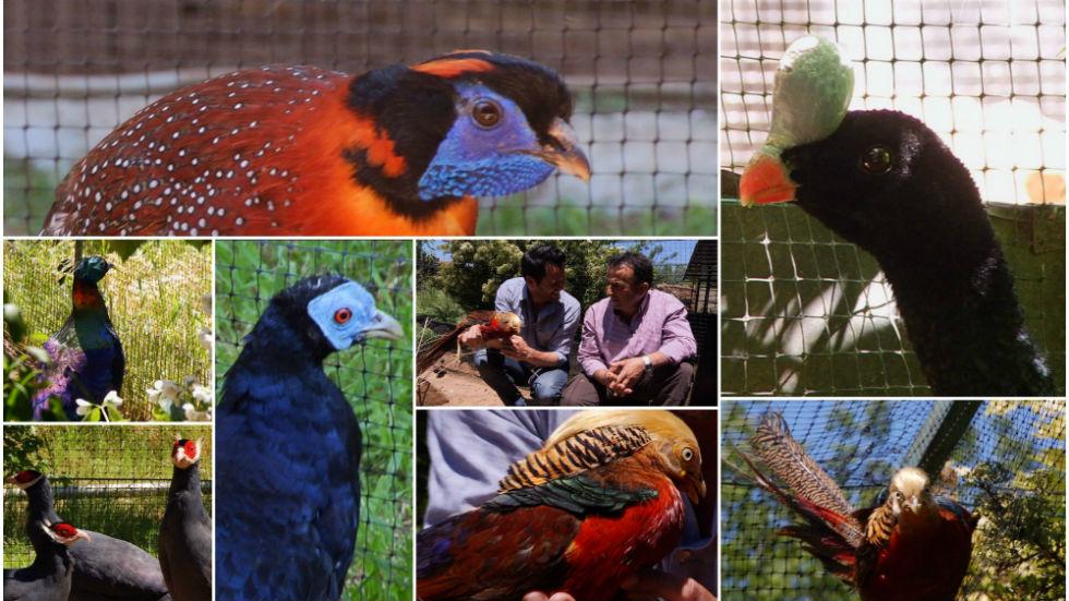 Aquí la tierra - Estas aves son modelos de pasarela