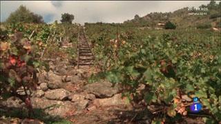 Comando Actualidad - La extra de otoño - Un vino de héroes