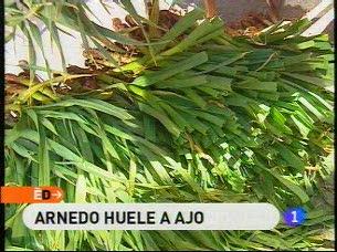 España Directo - La fiesta del ajo