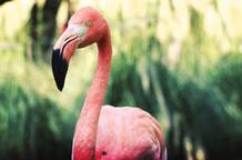 Flamenco en el Zoo Aquarium de Madrid