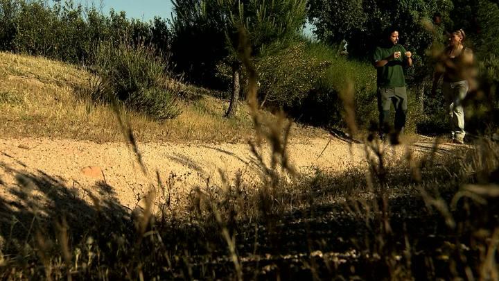 El escarabajo verde - Fototrampeo de Andújar