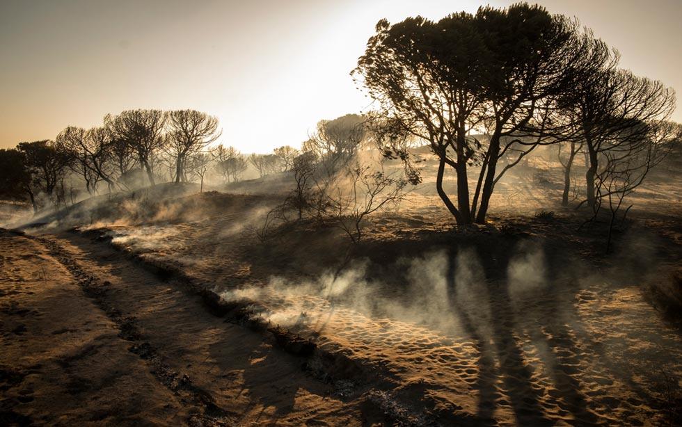 El fuego en el entorno de Doñana ha afectado a 8.486 hectáreas de matorrales y arbolado