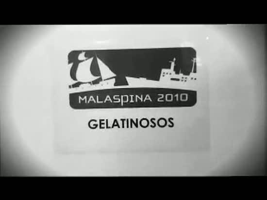 La Expedición Malaspina estudia los animales gelatinosos