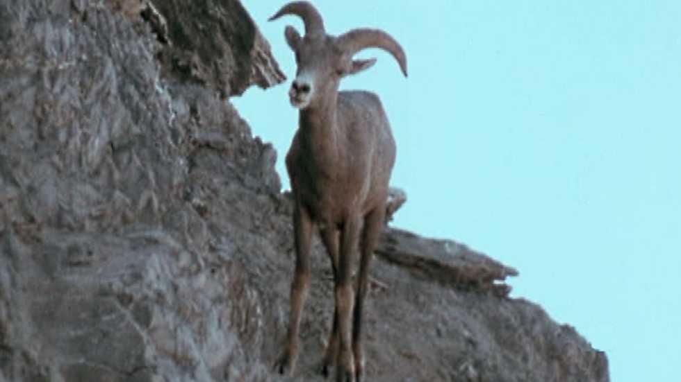 El hombre y la Tierra (Serie canadiense) - Gran fauna canadiense - Primera parte