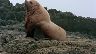 El hombre y la Tierra (Serie canadiense) - Gran fauna canadiense - Segunda parte