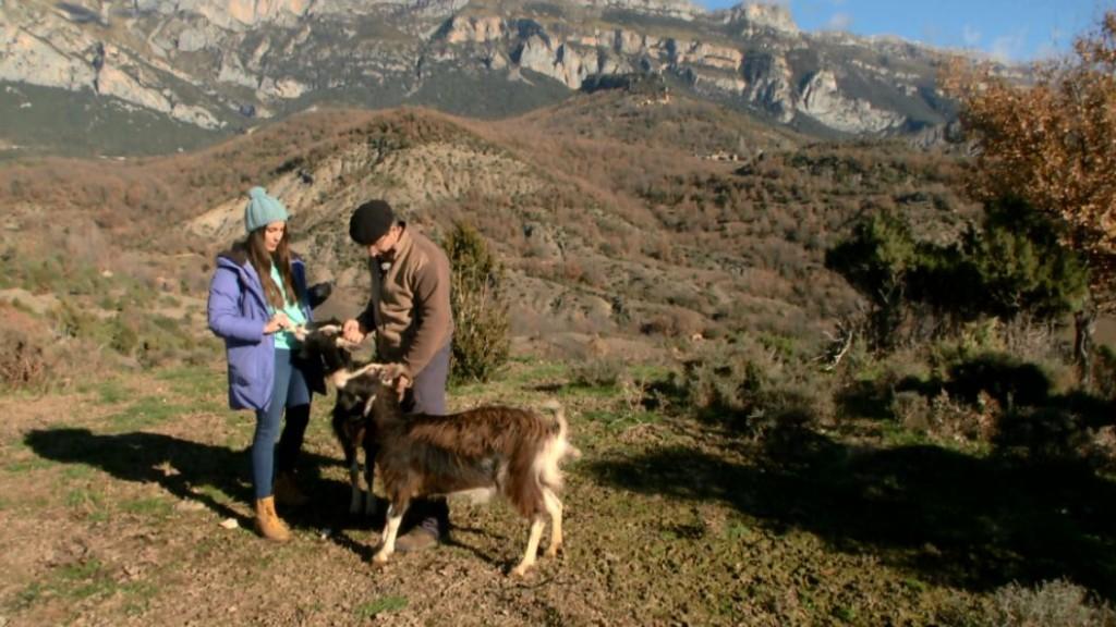 Aquí la Tierra - Grandes y fuertes: la cabra del Pirineo