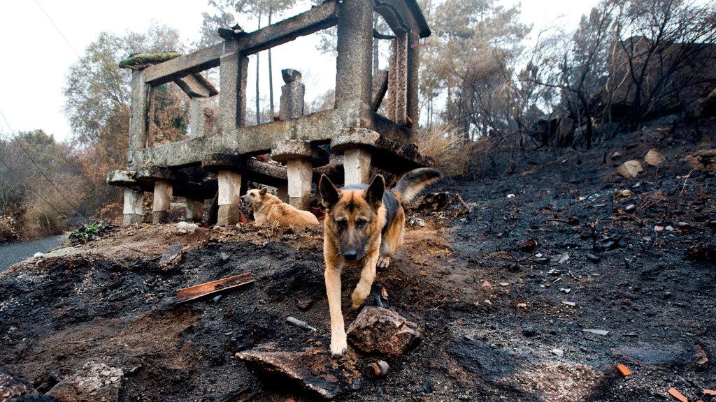 La Guardia Civil investiga la oleada de incendios de Galicia