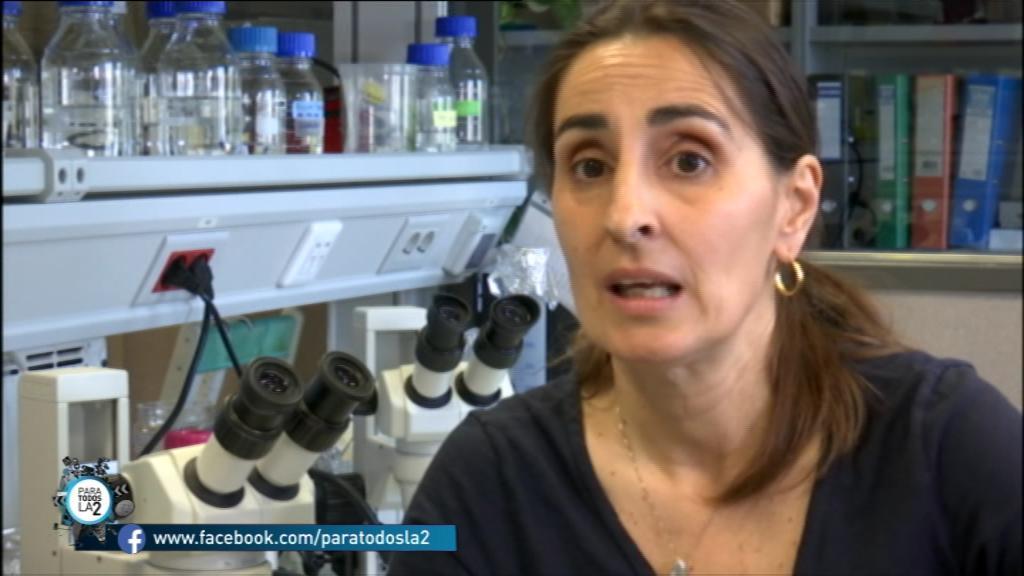 Para Todos La 2 - Reportaje:  Un gusano tiene la capacidad de biodegradar el polietileno por Federica Bertocchini