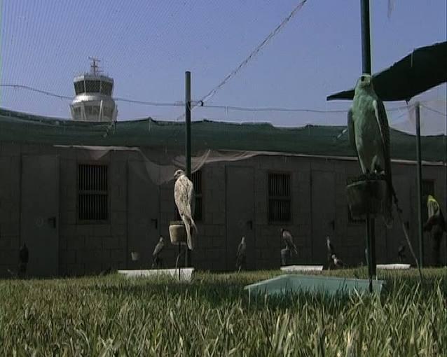 El escarabajo verde -  HALCONES versus AIRBUS