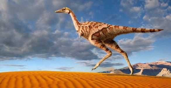 http://www.rtve.es/imagenes/hallan-china-primer-dinosaurio-del-mundo-solo-dedo/1295954662883.jpg